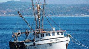 La pêche durable reste à quai !